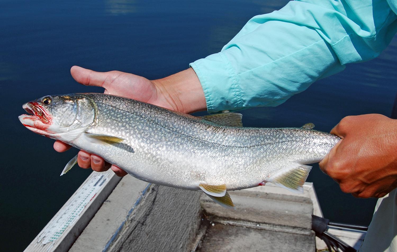 Keuka Lake Fishing