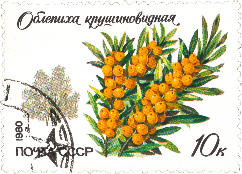 Sea-Buckthorn Soviet Stamp