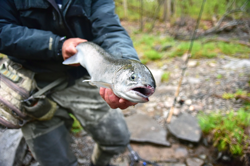 Salmon River - Steelhead Trout Fishing
