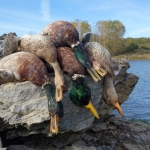 Thousand Islands Region - Duck Hunting