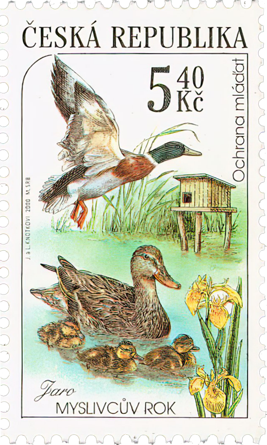 Czech Postage Stamp - Mallard Ducks