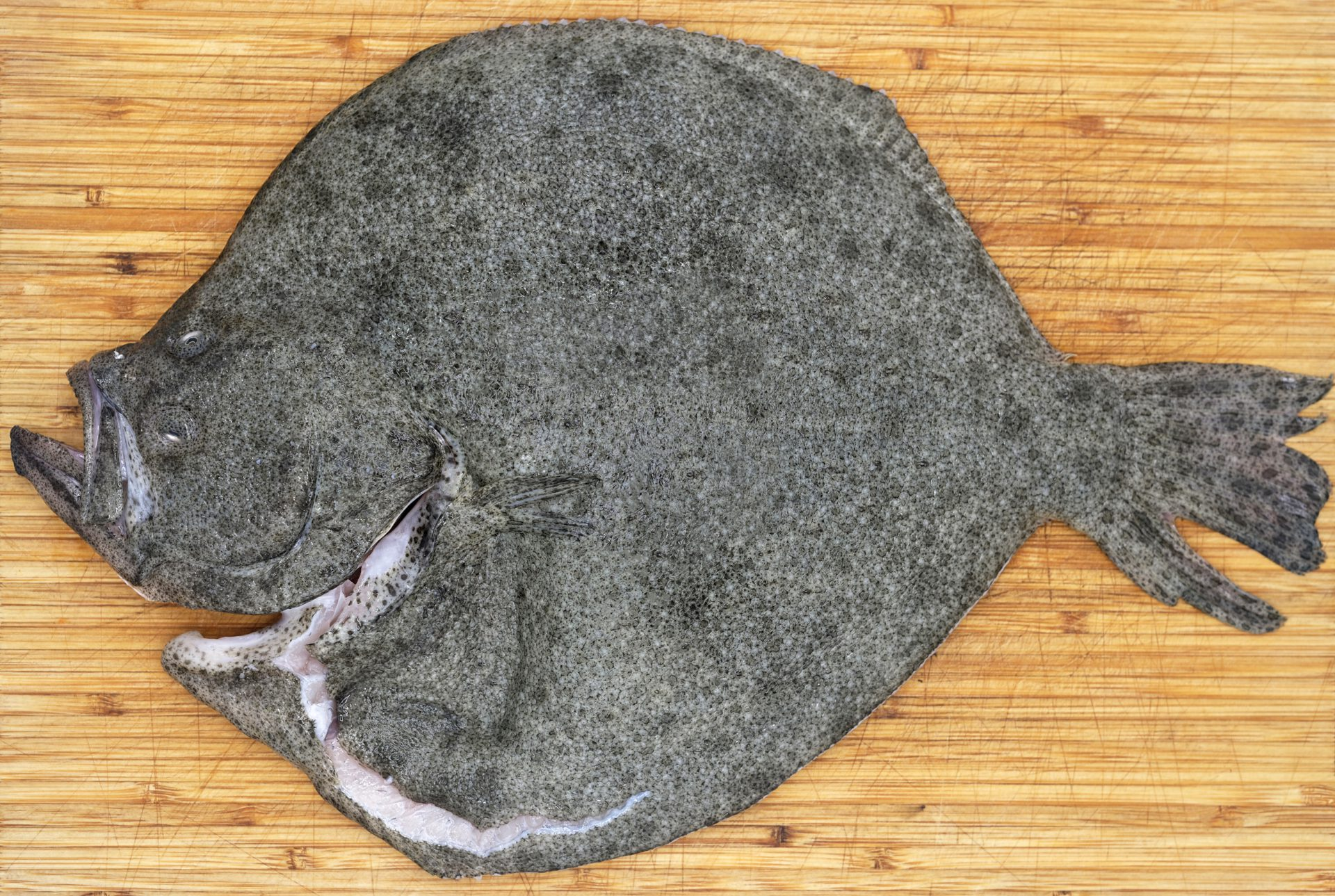 Roasted Turbot
