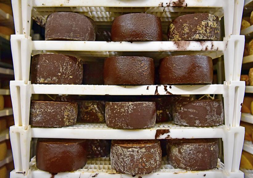 Pag Island - Gligora Cheese Factory